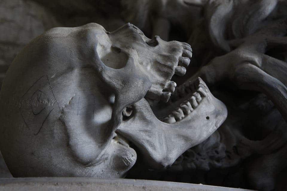 Skull jaw.