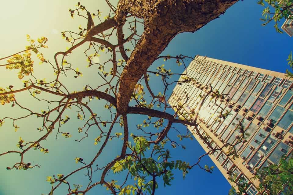 Tree city.