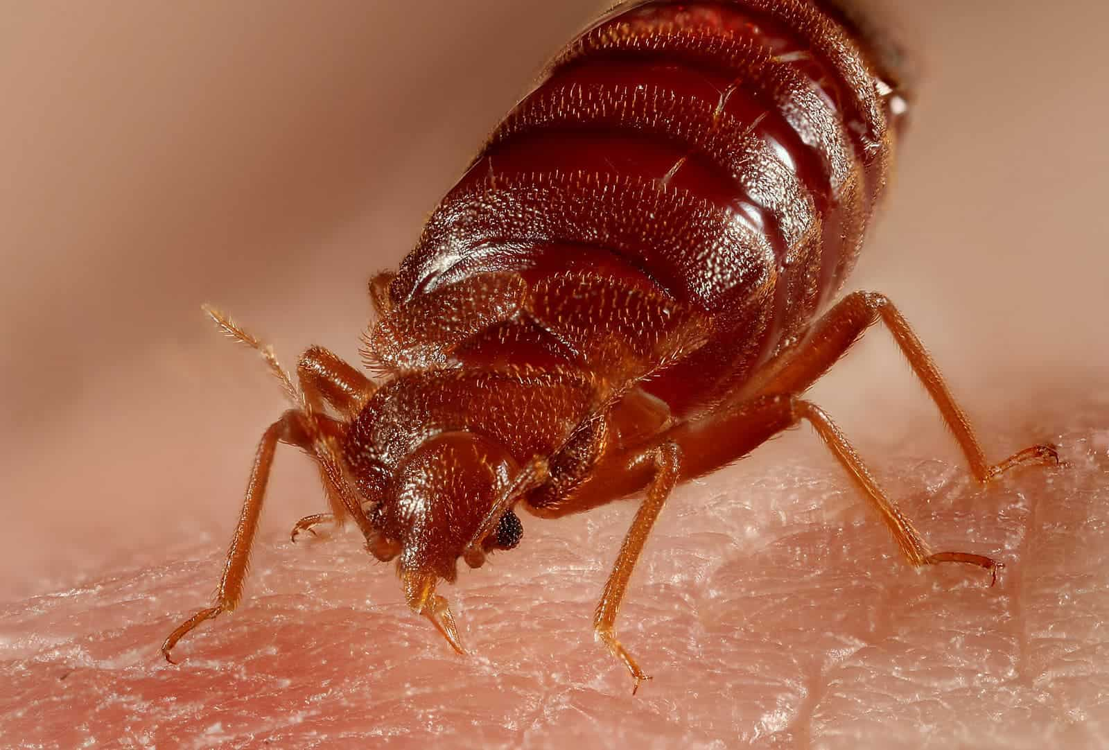bed bugs pest control mission - 800×500