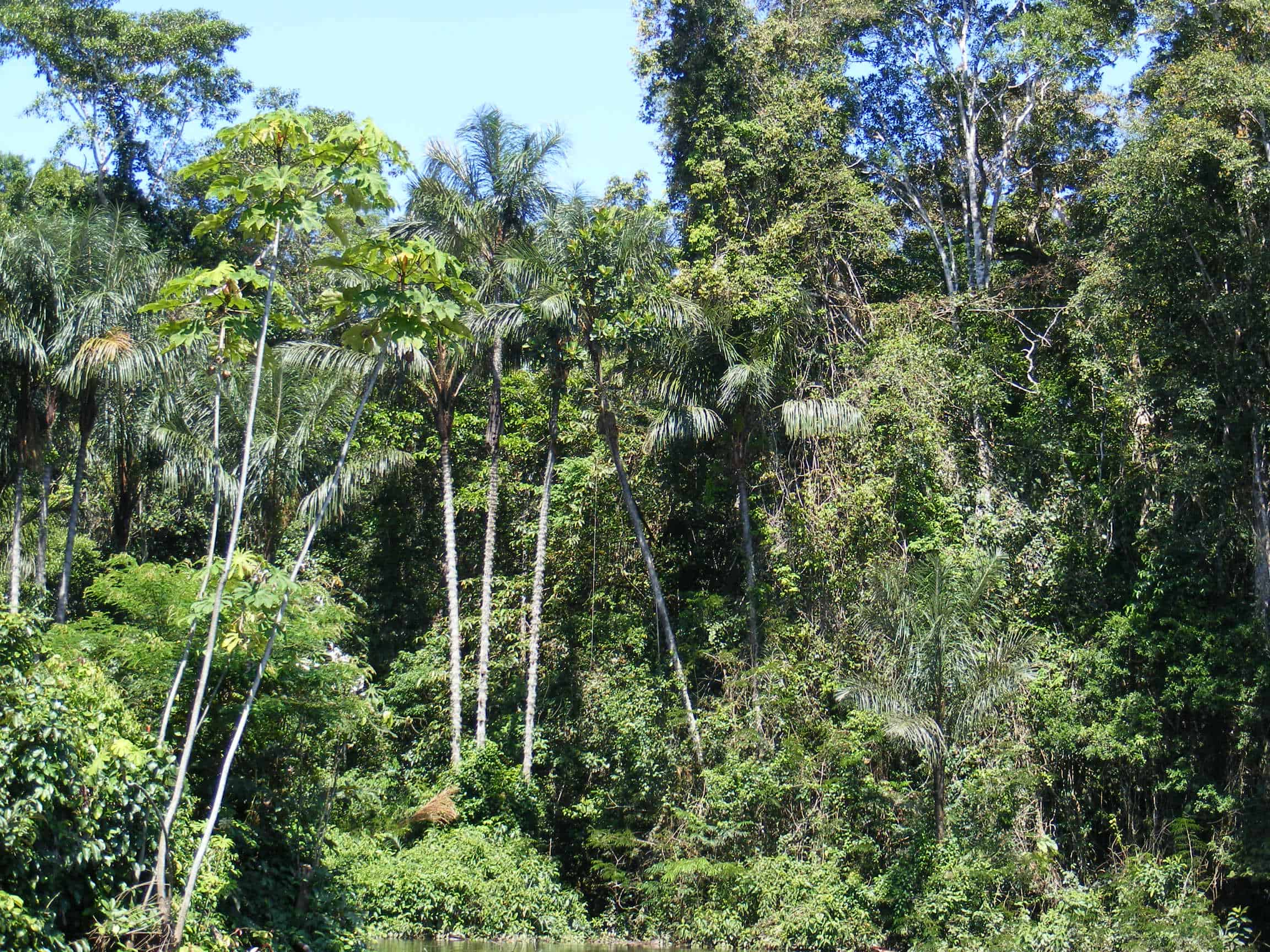 Fourteen thousand plant species have been discovered in ...