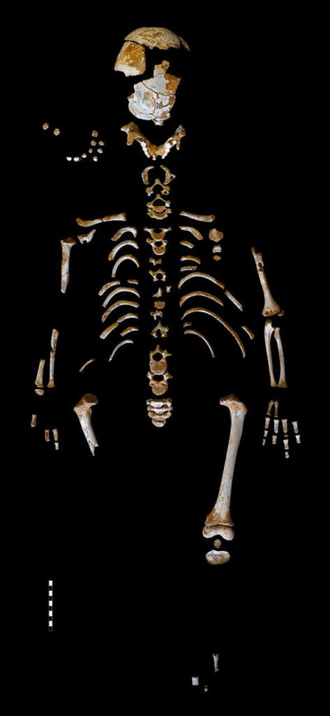 The partial skeleton of a Neandertal boy he grew slowly, akin to modern human children. Credit: Paleoanthropology Group MNCNCSIC.