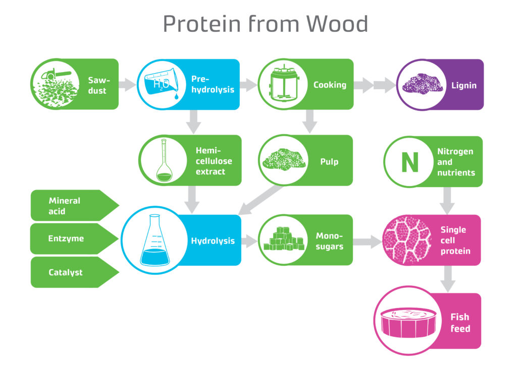 Protein from Wood.