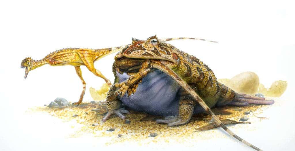 Beelzebufo ampinga munching on Cretaceous lunch. Credit: Wikimedia Commons.