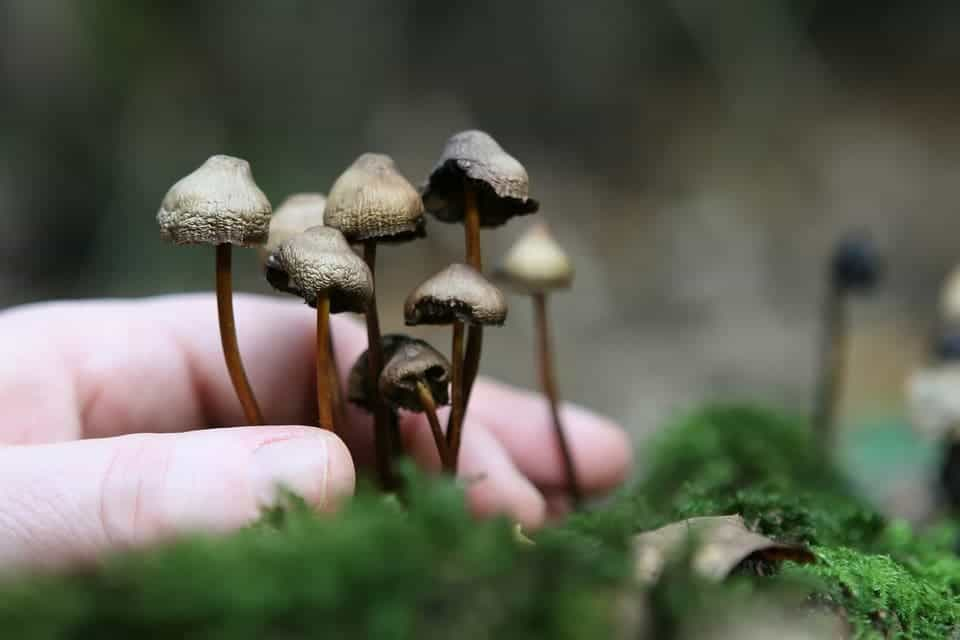 Magic mushrooms succeed where conventional drugs fail
