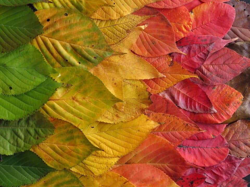 The science behind why leaves change color in autumn cf454afab27e