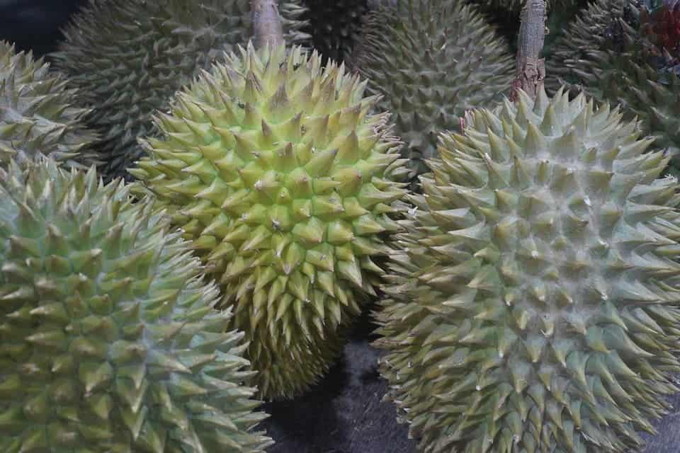 Durian is seen as delicious in Southeast Asia. Credit: Pixabay.