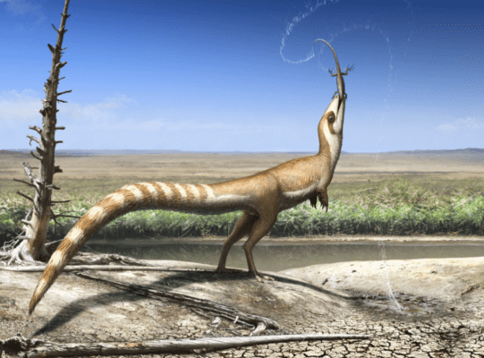 Sinosauropteryx probably lived in open environments, similar to today's gazelles. Credit: Robert Nicholls.
