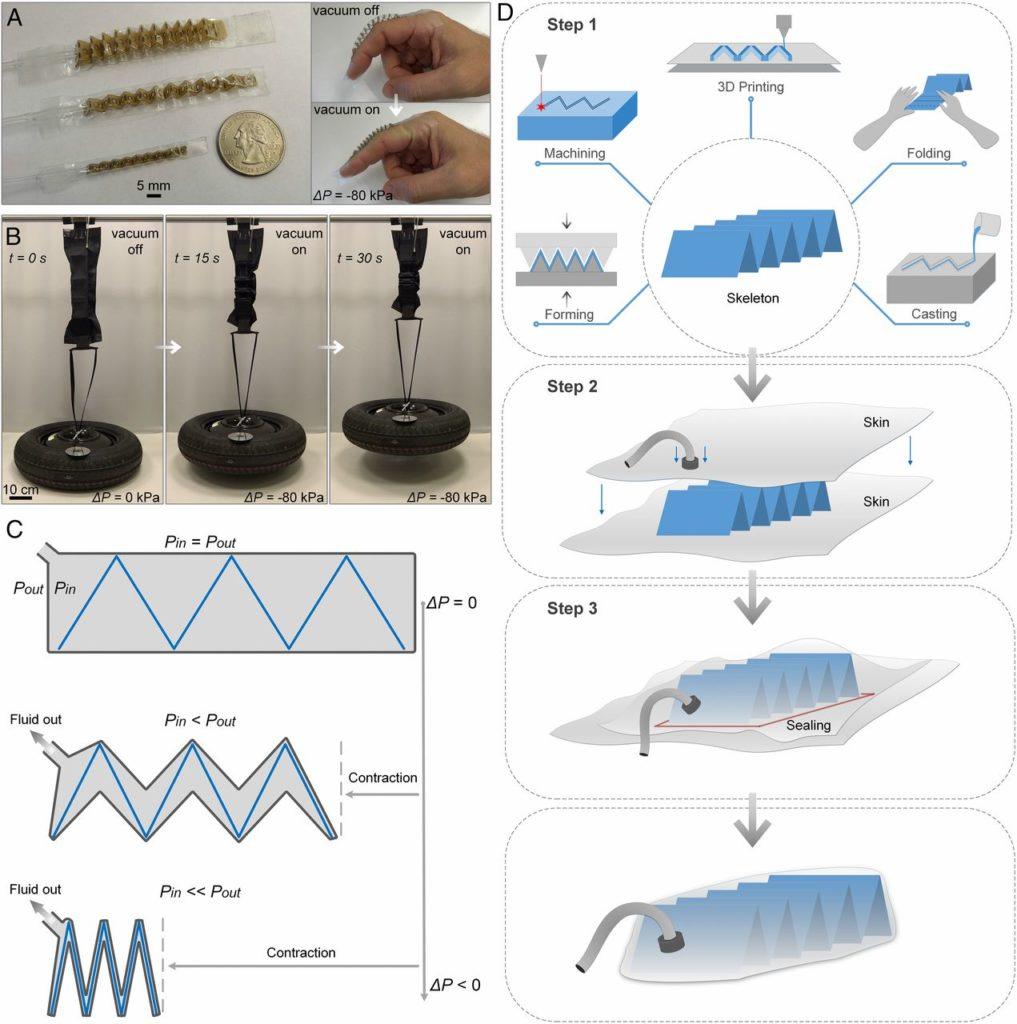 Artificial muscle fold pattern.