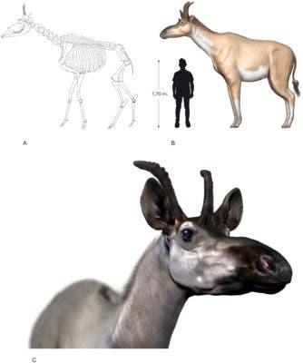 Decennatherium.