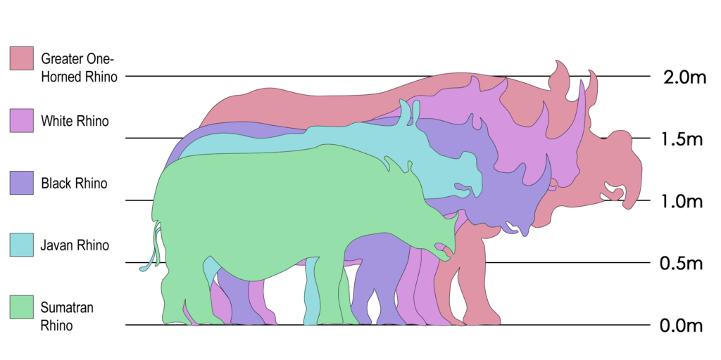 Rhino sizes.