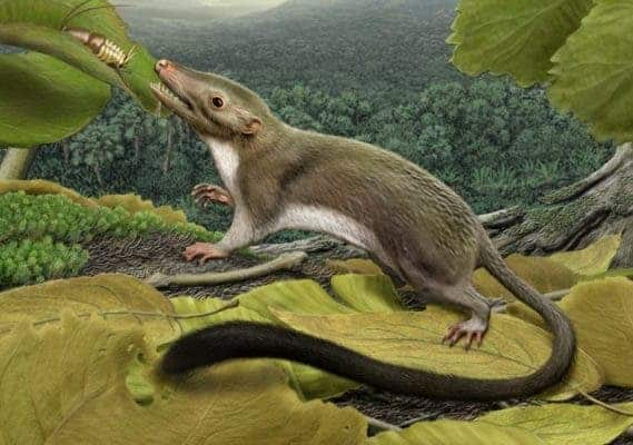 Mammals were free to occupy day-time niches after dinosaurs disappeared. Credit: Carl Buel.