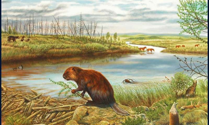 "A view of the Beaver Pond fossil site, with a number of the animals and plants based on fossils recovered from the site. Credit: George ""Rinaldinho"" Teichmann."