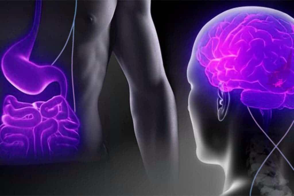 brain-stomach