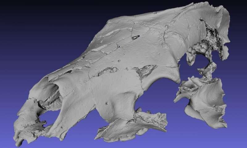 Digital reconstruction of the Canadian Arctic fossil bear, Protarctos abstrusus. Credit: Xiaoming Wang.