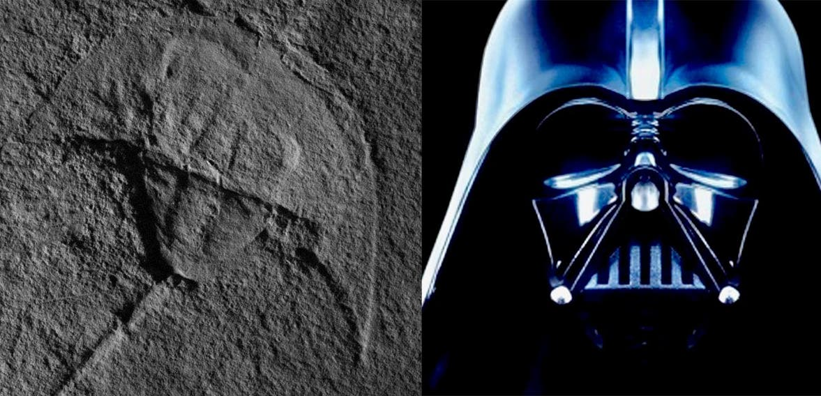 Scientists Name 245 Million Year Old Horseshoe Crab After Darth Vader