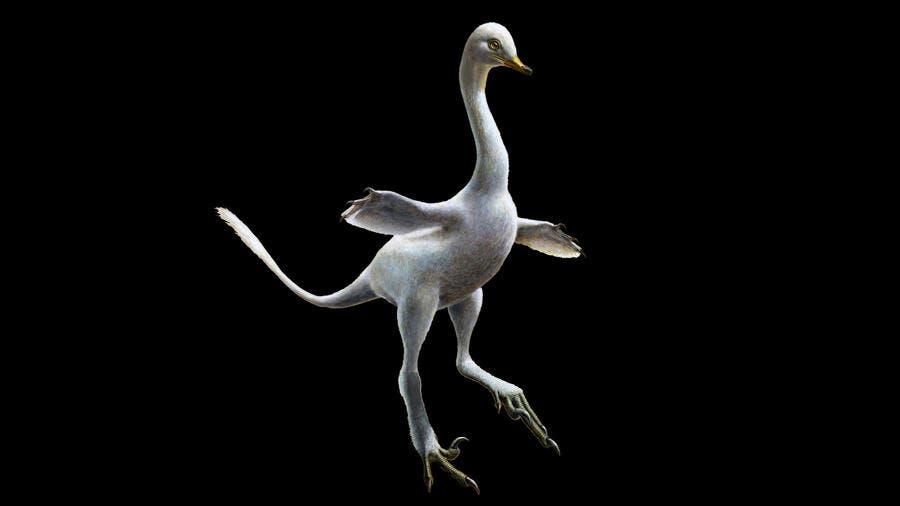 Artist impression of Halszkaraptor. Credit: Lukas Panzarin.