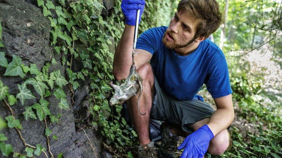Matt Combs (pictured) studied the DNA of 262 rats. Credit: Matt Combs.