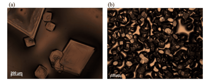 Optical micrscopy images of (a) monoclinic and (b) tetragonal aggregate films of lysozyme. Credit: Nature Materials.