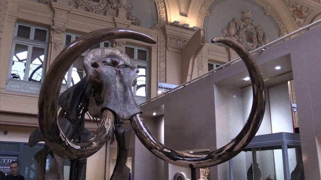 Mammoth lyon.