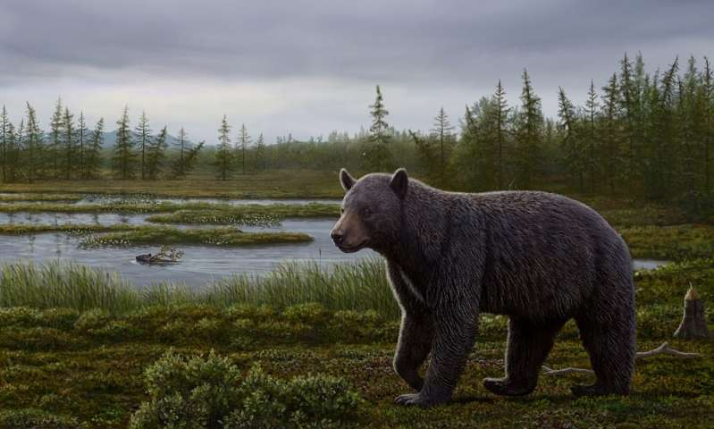 Reconstruction of the mid-Pliocene Protarctos abstrusus in the Beaver Pond site area during the late summer. Credit: Art by Mauricio Antón.