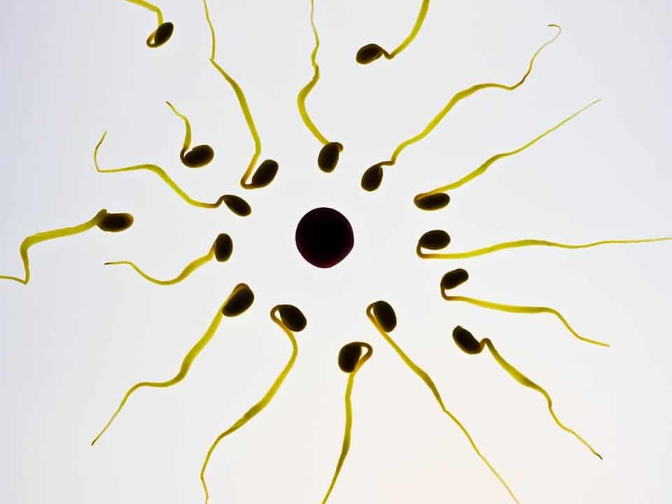Rub-on male contraceptive gel to be trialled next year