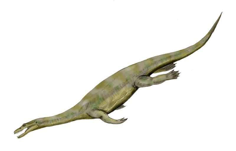 Nothosaurus. Credit: Wikimedia Commons.