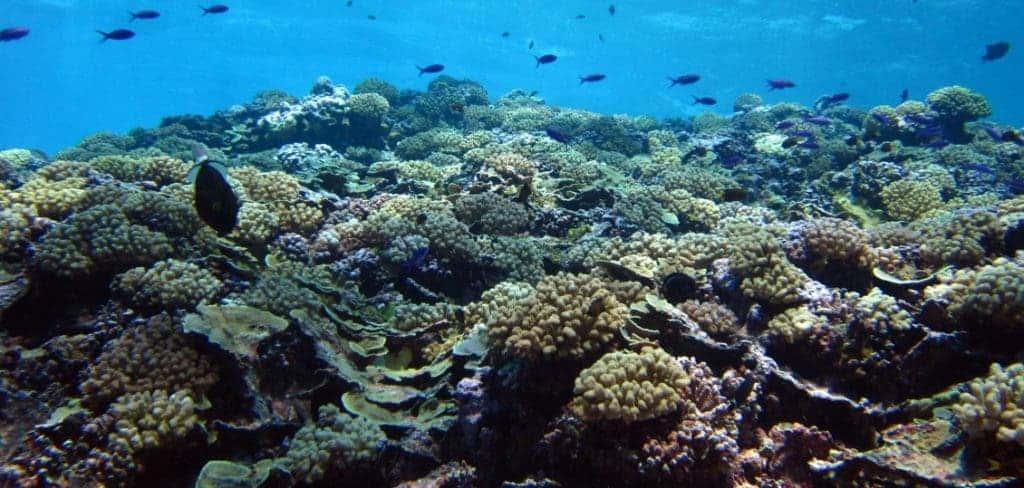 Dead reef.