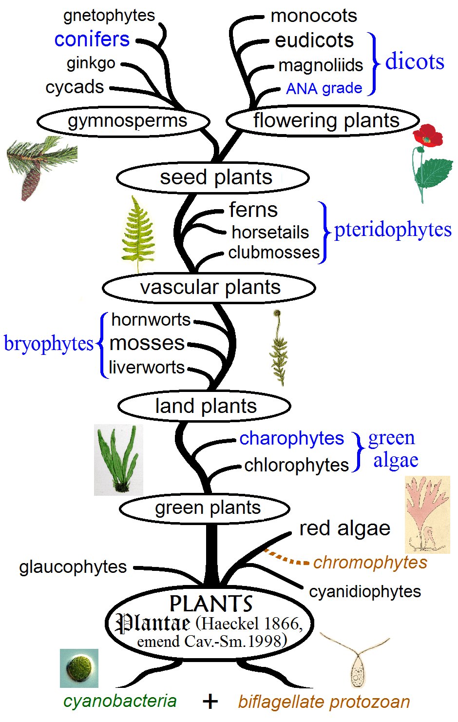 The Different Types Of Plants In The World