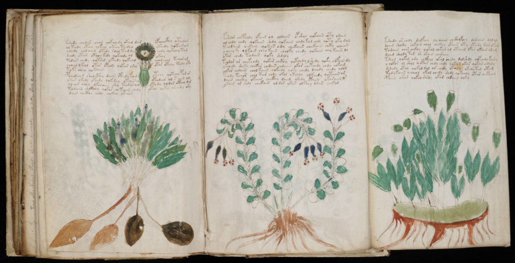 Excerpt from the Voynich Manuscript. Credit: Wikimedia Commons.