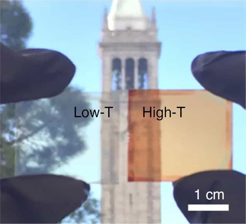 The cells change from transparent to orange-red when heated enough. Credit: UC Berkeley.