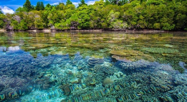 Reef coast.
