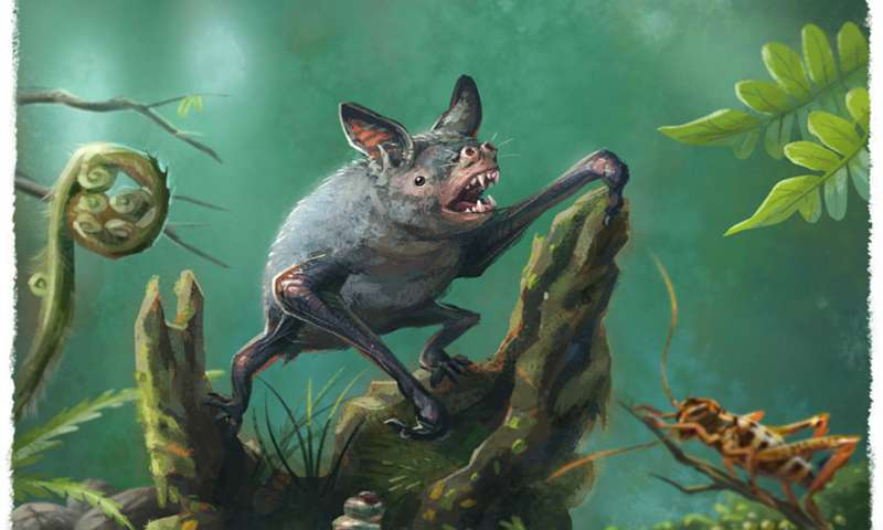 An artist's impression of a New Zealand burrowing bat, Mystacina robusta, that went extinct last century. Credit: Gavin Mouldey.