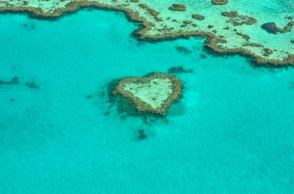 Coral reef heart.