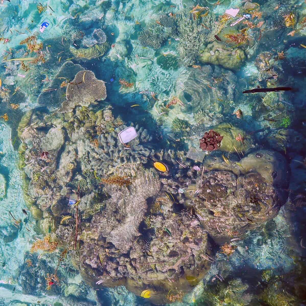 Billions Of Plastic Pieces Are Entangled In The Coral