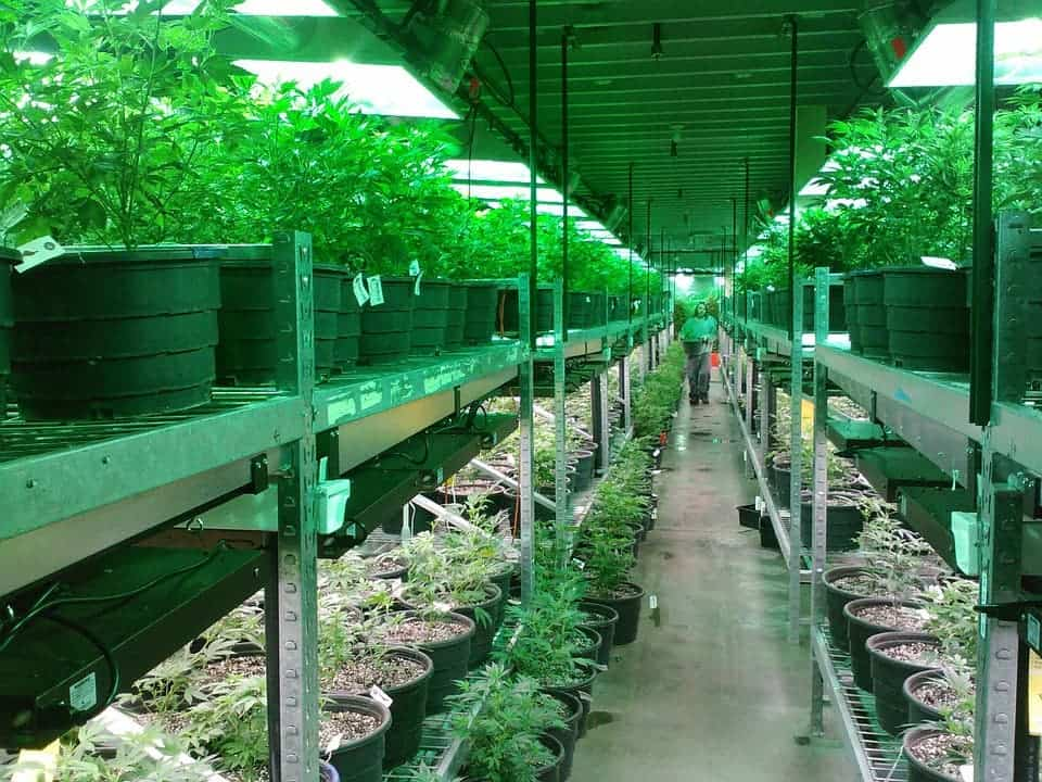 Marijuana farm in Colorado. Credit: Pixabay.