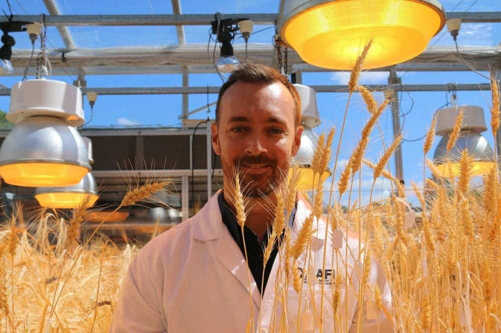 Lee Hickey, a researcher at the University of Queensland, in a wheat field grown with speed breeding. Credit: University of Queensland.