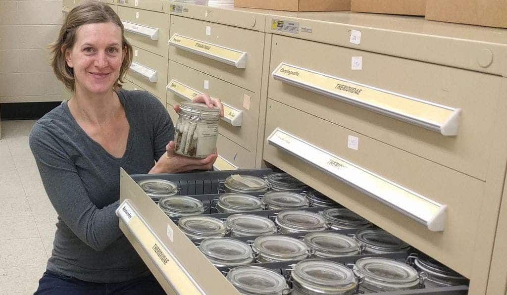 Hannah Wood is a curator of arachnids and myriapods at the Smithsonian's National Museum of Natural History. Credit: NMNH.