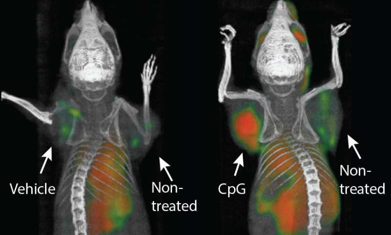 Cancer 'vaccine' found effective in mice