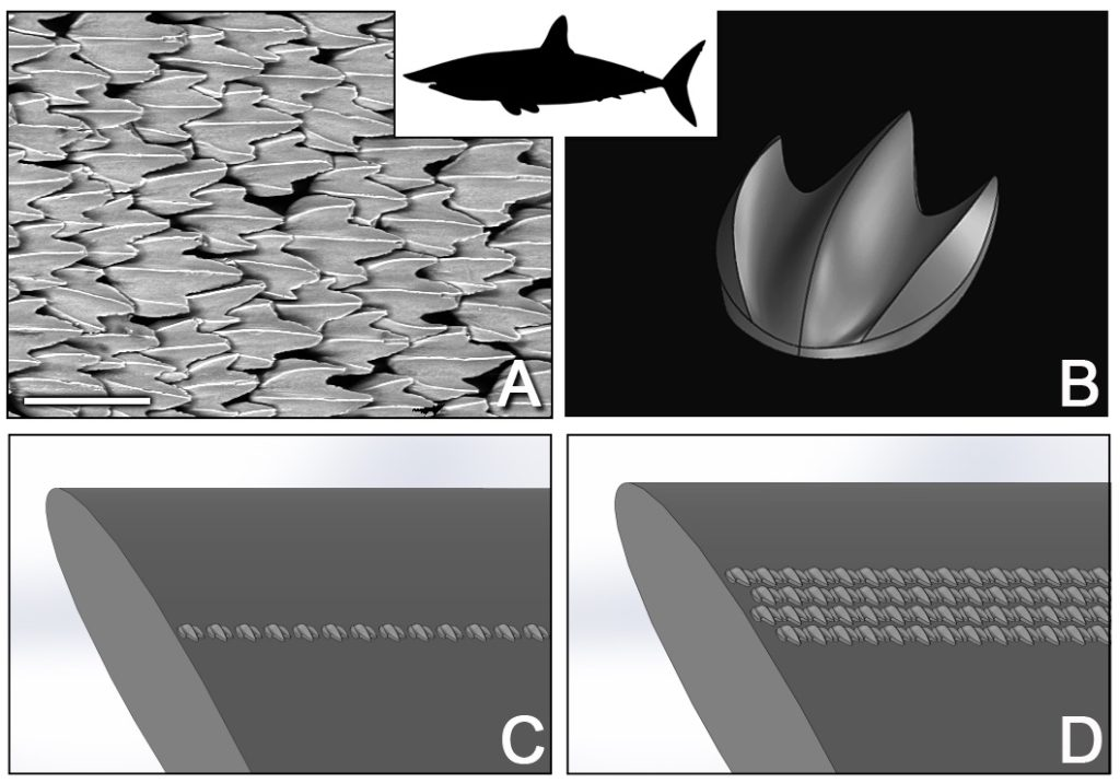 Environmental scanning electron microscope image of denticles from the shortfin mako shark (a) and of the parametric 3D model (b). These denticles were arranged in a wide range of different configurations on an aerofoil, two examples of which are shown here (c,d ). Credit: Harvard University.