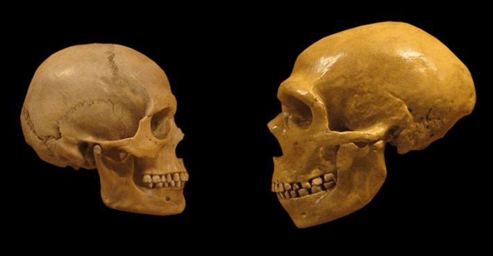 Sapiens-Neanderthal.