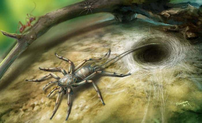 The new animal resembles a spider in having fangs, male pedipalps, four walking legs and silk-producing spinnerets but also bears a long flagellum or tail. Credit: Dinghua Yang