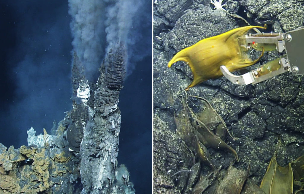 A 'black smoker' (left), the hottest type of vent. Skate egg cases collected in the area (right). Credit: Ocean Exploration Trust.