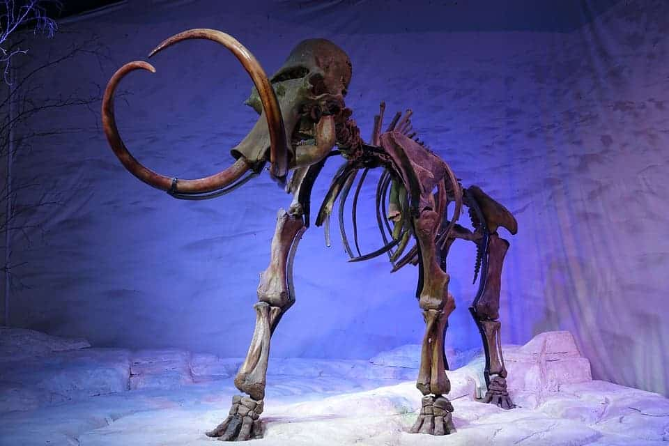 Mammoth.