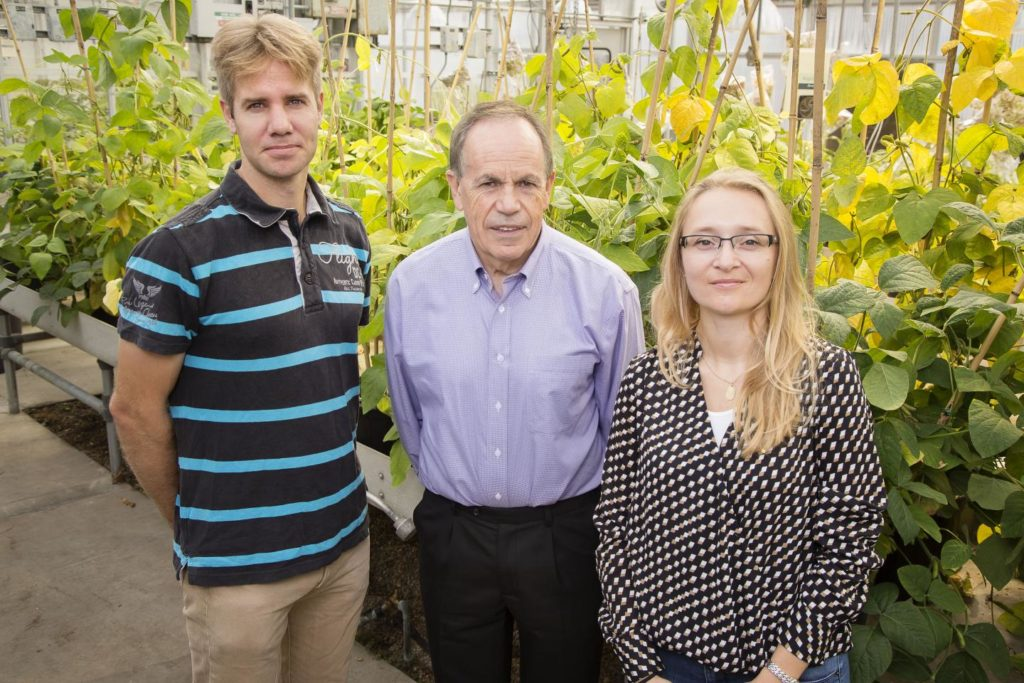 Stephen Long, a professor of crop sciences and of plant biology (center), with postdoctoral researchers Johannes Kromdijk, (left) and Katarzyna Glowacka, Credit: Brian Stauffer/University of Illinois.