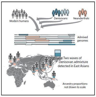 Two waves of Denisovan ancestry have shaped present-day humans. Credit: Browning et al./Cell.