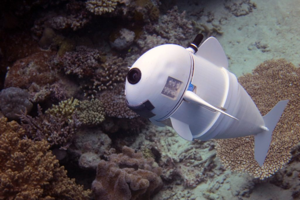 This is SoFi, a robotic fish designed at MIT. Credit: MIT.