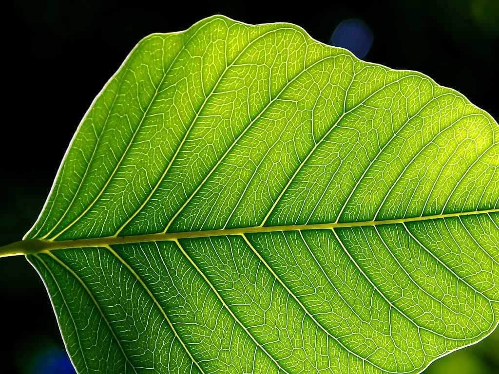 Scientists Developed Artificial Photosynthesis to Produce More Solar Energy