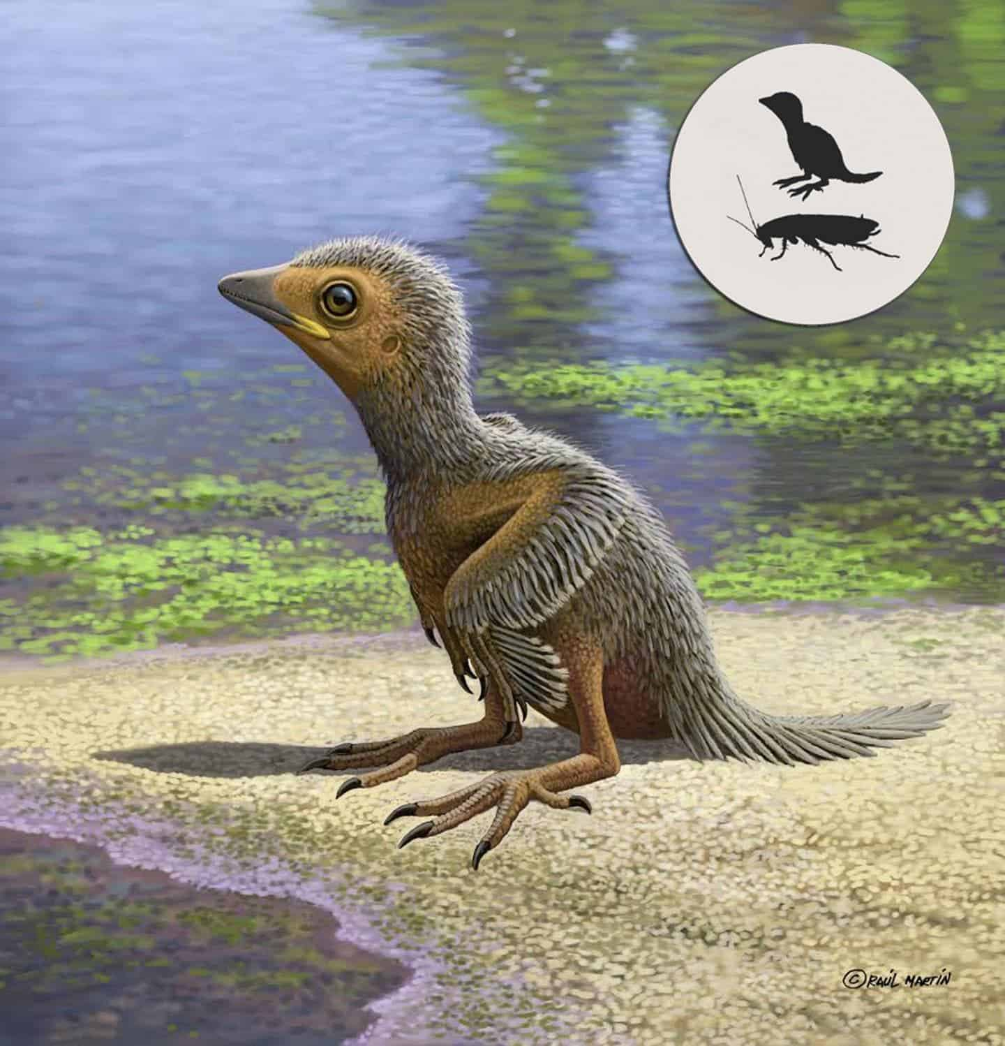 Ancient baby bird fossil offers insights into avian evolution