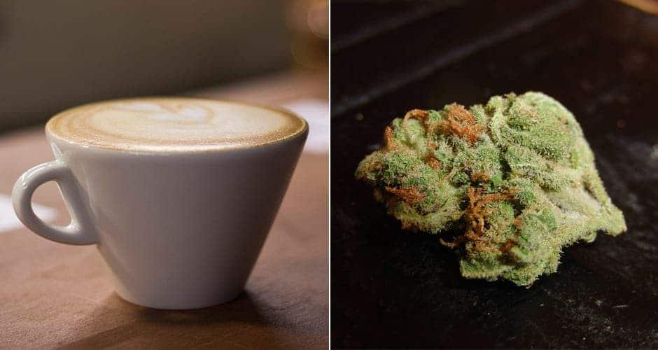 coffee-weed
