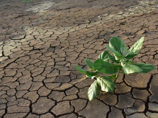 Plant on dry soil.